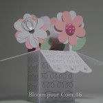 Explosion de fleurs…